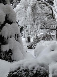 03-snowyburden